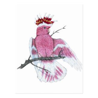Leadbeater Cockatoo Postkarte