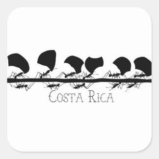 Leafcutter Ameise Costa Rica Quadratischer Aufkleber