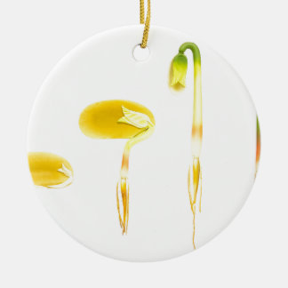 Lebenszykluskeimungsbohne auf Weiß für Bildung Keramik Ornament