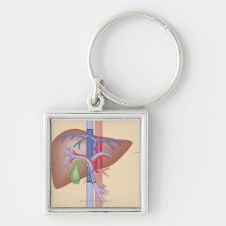 Leber-Transplantations-Verfahren Silberfarbener Quadratischer Schlüsselanhänger