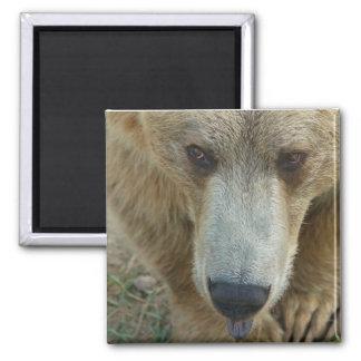 Lecken des Bären Quadratischer Magnet