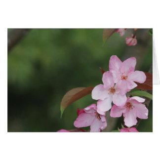 Leere Karte mit Holzapfel-Blüten-Hintergrund
