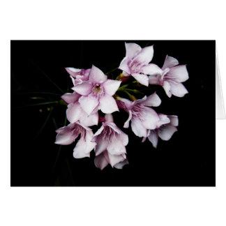 Leere Karte - rosa Oleander