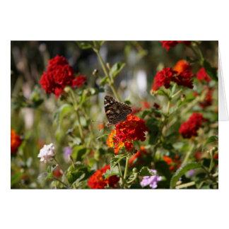 Leere Karte, Schmetterling Karte