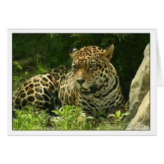 Leere Karten-Jaguar-Foto Karte
