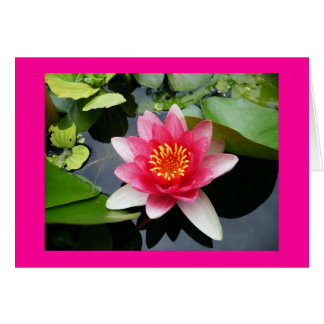 Leere rosa Wasserlilie Karte