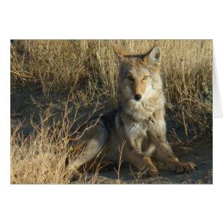 Legen des Kojote-R0015 Karte