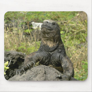 Leguan and plants of the Galapagos Mousepad