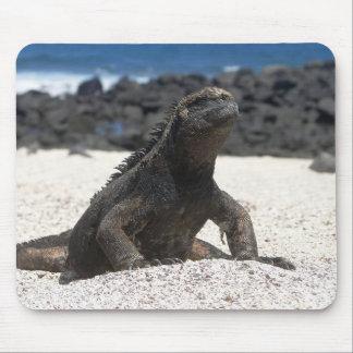 Leguan and rocks of the Galapagos Mousepad
