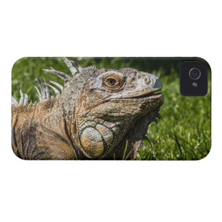 Leguan-Eidechse Case-Mate iPhone 4 Hülle