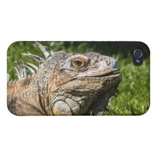 Leguan-Eidechse iPhone 4/4S Hülle