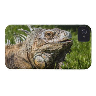 Leguan-Eidechse iPhone 4 Cover