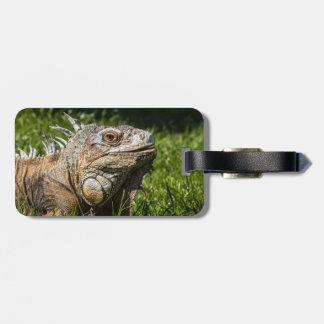 Leguan-Eidechse Kofferanhänger