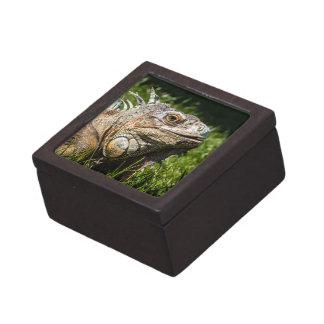 Leguan-Eidechse Schachtel