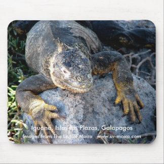 Leguan, Islas las Piazzen, Galapagos Mousepad