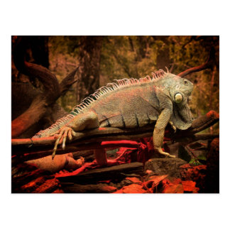 Leguan Postkarte