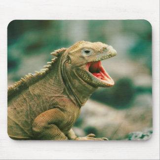 Leguan sagt Rawr Mousepad