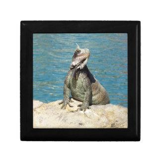 Leguan-tropische wild lebende Tiere Schmuckschachtel