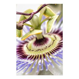 Leidenschafts-Blume Briefpapier