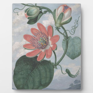 Leidenschafts-Blume Fotoplatte