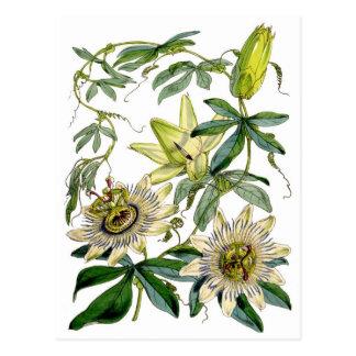 Leidenschafts-Blumen-botanische Illustration Postkarte