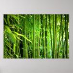 Leinwanddruck Leinwand  Canvas Print   Bambus Plakat