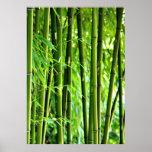 Leinwanddruck Leinwand Leinwand-Druck   Bambus Plakat