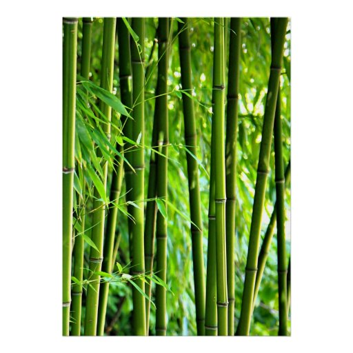 leinwanddruck leinwand leinwand druck bambus poster zazzle. Black Bedroom Furniture Sets. Home Design Ideas