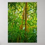 Leinwanddruck Leinwand Leinwand-Druck   Bambus Plakate
