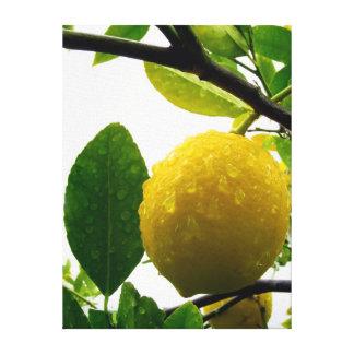 Leinwanddruck - Zitrone im Regen