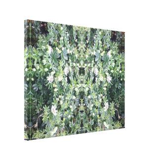 Leinwandmedium des Clematis-Blumen-Spiegel-713 Leinwanddruck