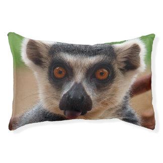 Lemur Haustierbett