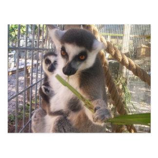 Lemur Postkarte