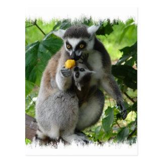 Lemur-Postkarte Postkarte