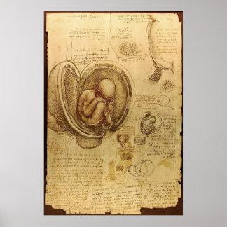 Leonardo da Vinci - Studie der Anatomie Poster