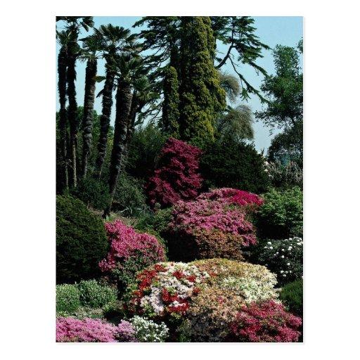 Leonardslee Gärten, Westsussex, England Postkarten