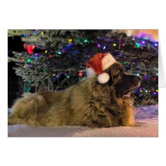 Leonberger funkelnd Weihnachtskarte Karte