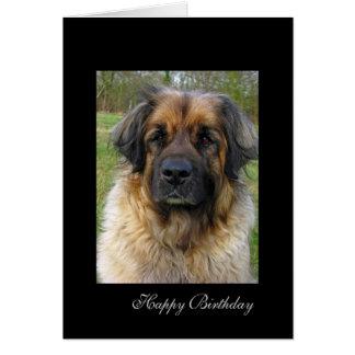 Leonberger Hundegeburtstagskarte, schönes Foto Grußkarte