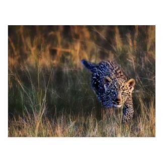 Leopard-CUBPanthera Pardus) wie in gesehen Postkarte