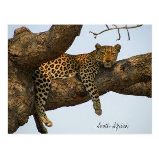 Leopard, der in einem Baum sitzt Postkarte