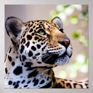 Leopard-Fotografie Posterdrucke