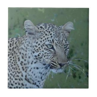 Leopard-Hauptt-stück Keramikfliese