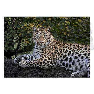 Leopard-Kaiserin Karte