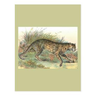 Leopard-Katze (Javan Vielzahl) Felis javanensis Postkarte
