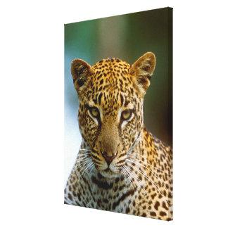 Leopard-Porträt Leinwanddruck