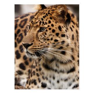 Leopard-Postkarte Postkarte