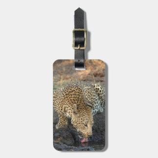 Leopard-Trinkwasser Kofferanhänger