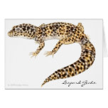 Leopardgecko-Karte