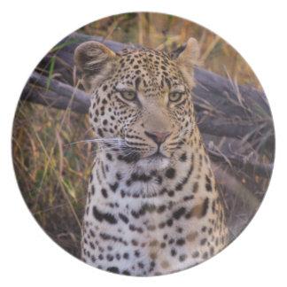 Leopardsitzen, Botswana, Afrika Melaminteller