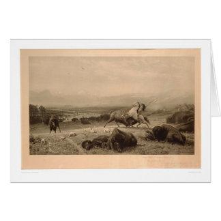 Letzt vom Büffel Bierstadt (0137A) - nicht Karte